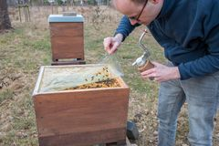 Beekeeper looks after his bee colony by lifting a plastic cover. Beekeeper checks a beehive after the cold winter time. He lifts a plastic protection cover to Royalty Free Stock Image