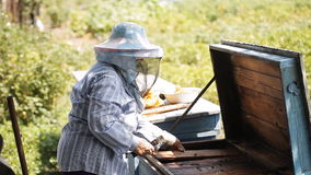 Beekeeper checks beehive stock video footage