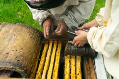 A beekeeper checks the beehive and honey frames of bees. Beekeeping work on the apiary. Selective focus. Horizontal Frame royalty free stock photography