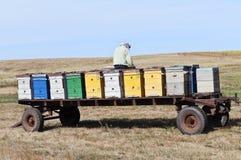 A beekeeper checks hives Stock Photos