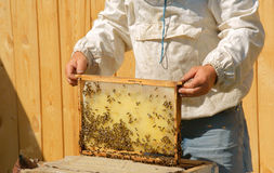 Beekeeper checks honey Royalty Free Stock Photo