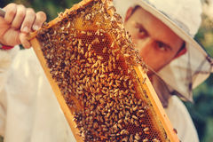 Beekeeper collecting honey Royalty Free Stock Image
