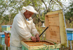 Beekeeper collects propolis. Apiarist is working in his apiary. Stock Photography