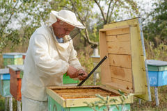 Beekeeper collects propolis. Apiarist is working in his apiary. Royalty Free Stock Image