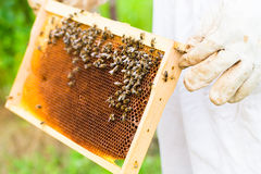 Beekeeper controlling beeyard Royalty Free Stock Photos