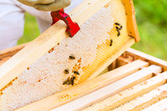 Beekeeper controlling beeyard Royalty Free Stock Photography