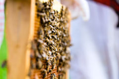 Beekeeper controlling beeyard. And bees Royalty Free Stock Images