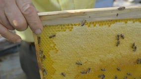 Beekeeper controlling beeyard and bees stock video