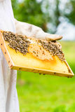 Beekeeper controlling beeyard and bees Stock Image