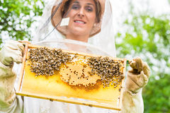 Beekeeper controlling beeyard and bees Stock Photos