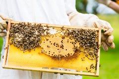 Beekeeper controlling beeyard and bees Stock Photography