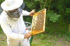 Beekeeper controlling beeyard and bees outdoor. Beekeeper controlling beeyard and bees Royalty Free Stock Photography