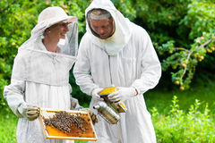 Beekeeper controlling beeyard and bees Royalty Free Stock Photos