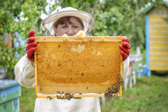 Beekeeper controlling comb frame Stock Image