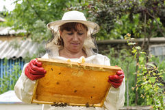 Beekeeper controlling comb frame Stock Photos