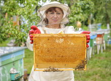 Beekeeper controlling comb frame Royalty Free Stock Image