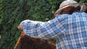beekeeper stock footage