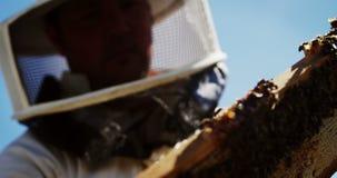 Beekeeper examining hive frame stock video footage