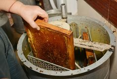 Beekeeper extracting fresh honey from a honeycomb with a knife tool and honey extractor royalty free stock photo