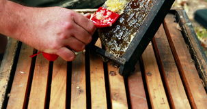 Beekeeper extracting honey from honeycomb in apiary. Close-up of beekeeper extracting honey from honeycomb in apiary stock footage