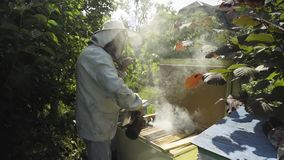 Beekeeper fimugate beehive with bee smoker. Beekeeper fumigate bee hive with bee smoker. The apiculturist calm the insects before taking the honeycombs from stock footage