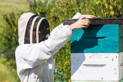Beekeeper With Fume Board Royalty Free Stock Photos