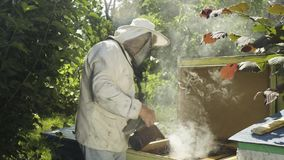 Beekeeper in protective uniform fumigate hive with bee smoker in slow motion. Beekeeper fumigate bee hive with bee smoker. The apiculturist calm the insects stock video