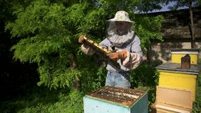 The beekeeper gently pulls out the honeycomb from the hive and looks at it. Watches the honey cell for the presence of stock video footage