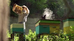 The beekeeper gently pulls out the honeycomb from the hive and looks at it. Watches the honey cell for the presence of stock video