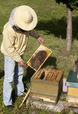 Beekeeper from Germany Stock Photo