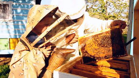 Beekeeper grandfather and grandson examine a hive of bees stock video footage