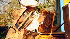 Beekeeper grandfather and grandson examine a hive of bees stock footage