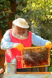 Beekeeper harvesting. Honey and smoking the bees Stock Images