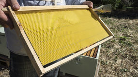 The beekeeper has control a new honeycomb Royalty Free Stock Images