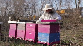 Apiarist is control situation with supplemental feeding with sugar cake in bee colony stock footage