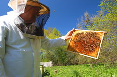 Beekeeper in his apiary Stock Photography