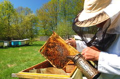 Beekeeper in his apiary Royalty Free Stock Image