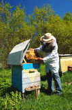 Beekeeper in his apiary Royalty Free Stock Images