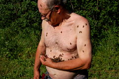 Beekeeper and his bees Royalty Free Stock Photography
