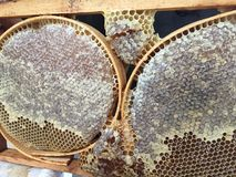 A beekeeper and his honeycomb stock images