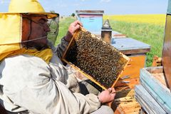 Beekeeper and his mobile beehives. In oilseed rape farmland during spring Royalty Free Stock Photos