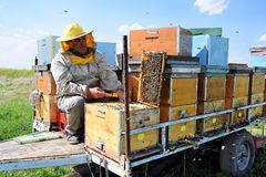Beekeeper and his mobile beehives. In oilseed rape farmland during spring Stock Photo