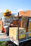 Beekeeper and his mobile beehives. In oilseed rape farmland during spring Royalty Free Stock Image