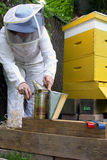 Beekeeper and hive Stock Image