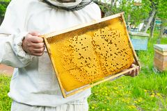 A beekeeper is holding a frame with bee larvae and honey. Beekeeping work on the apiary. Selective focus. Horizontal frame stock photo
