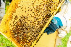 A beekeeper is holding a frame with honey and bees. Beekeeping work on the apiary. Selective focus. Horizontal frame royalty free stock photography