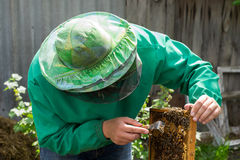 Beekeeper holding a frame of honeycomb with bees and cleaning of drones. Beekeeper holding frame of honeycomb with bees and cleaning of drones stock photo