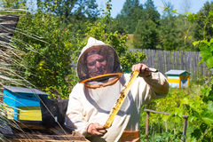 Beekeeper holding a frame of honeycomb Stock Photography