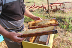 Beekeeper holding a frame of honeycomb. Stock Photography