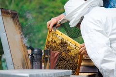 Beekeeper holding frame of honeycomb with working bees outdoor Royalty Free Stock Images